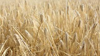 Suur-Seudun Osuuskauppa SSO:n maatalouskauppa yhtiöitetään