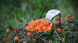 Cloudberries in kuksa, incentive meeting in lapland