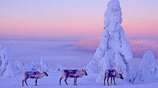 Break Sokos Hotel Levi, majoitus, hotelli, huone, lappi, lapland, accommodation, hotel, loma, matka, holiday, vacation, Finland, winter wonderland