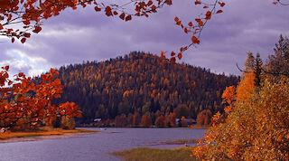 break sokos hotel Levi, ruska, ruskaretki, ruskamaraton, matkailu, loma,poro, reindeer, autumn, finland, lapland, lappi syysloma
