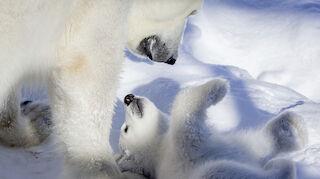 ranua arctic zoo oulu sokos hotels