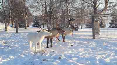 reindeer hotel original sokos hotel kuusamo