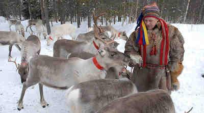 reindeer farm ruka original sokos hotel kuusamo