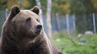 karhunkierros kuusamo