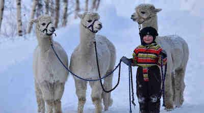 Lasten kanssa Vaasassa, tekemistä Vaasassa talvella, tropiclandia, vaasa, majoitus vaasa