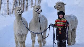 Lasten kanssa Vaasassa, tekemistä talvella Vaasassa tropiclandia, vaasa, majoitus vaasa