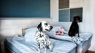 Lemmikkiystävällinen hotelli - Vaakuna Vaasa