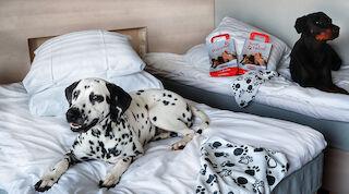 hund husdjur hotell vaakuna vasa