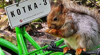 Orava pyöräilemässä