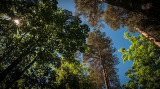 luontoon,kansallispuistot, hossa, hiidenportti, luonto lähellä