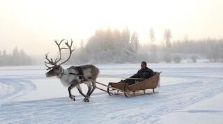 Reindeers - Break Sokos Hotel Tahko