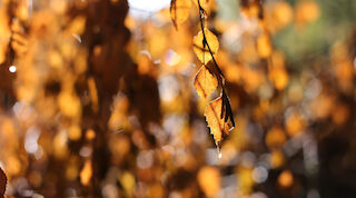 fall, autumn, ruska, finland, mikkeli, holiday, hotel