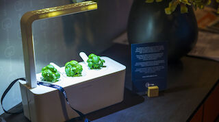 solo sokos hotel estoria plant growing nanotechnology click&grow