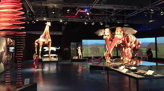 heureka original sokos hotel vantaa eläinten body wolrds luokkaretki