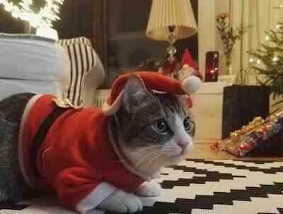 joulu, resepti, keittiömestari, ravintola, pruuvi, mikkeli, joulu, tarja lappeteläinen,